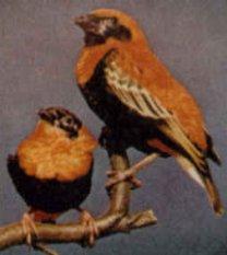 Orange Weaver Article Voucherb10a