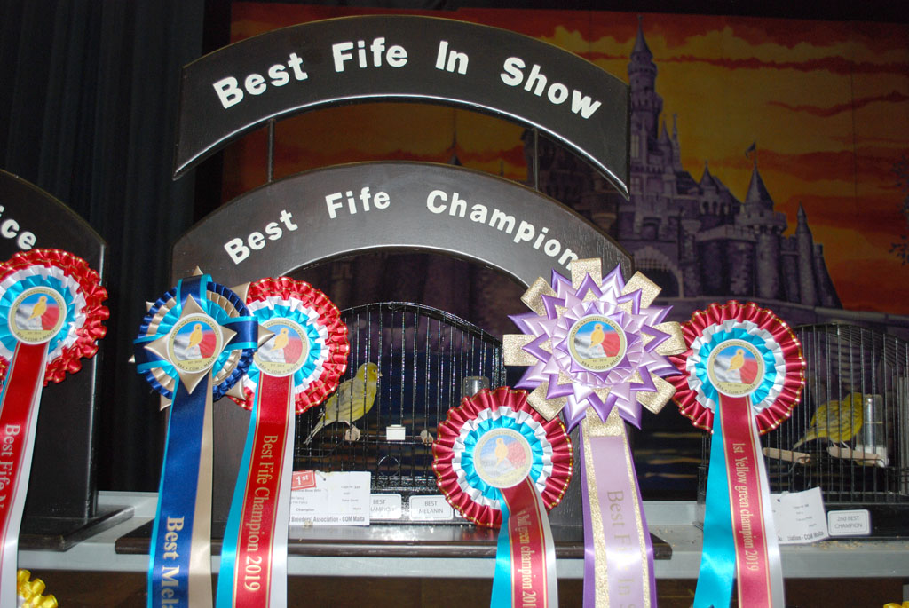 BEST Fife in show canaries