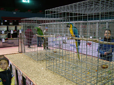 PARROT SECTION