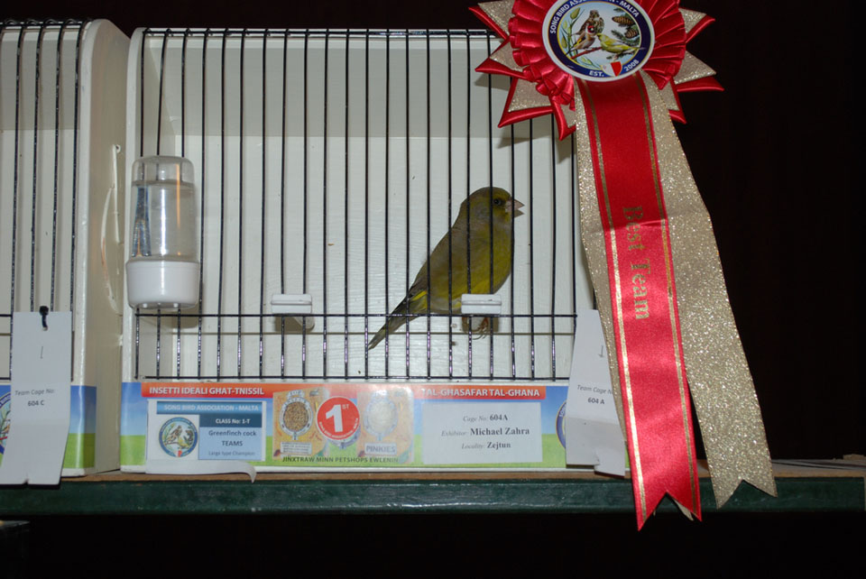 Show greenfinches