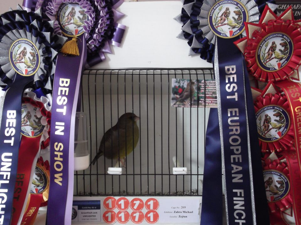Best in show greenfinch